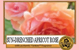 Sun Drenched Apricot Rose