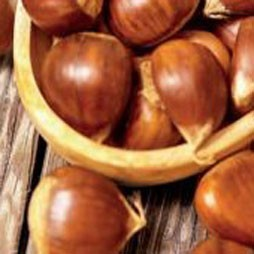 Golden Chestnut